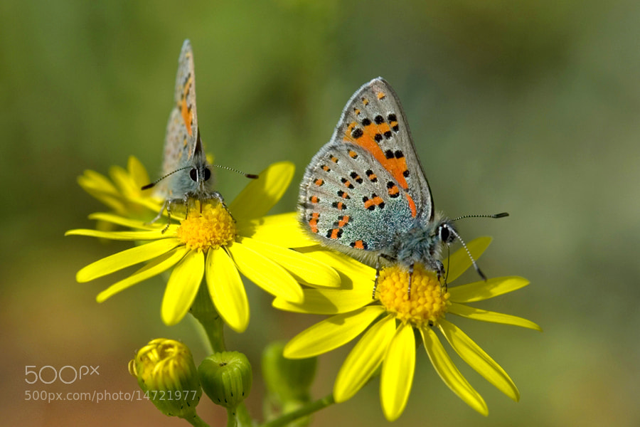 Photograph front and side by Tulgay Alıcı on 500px
