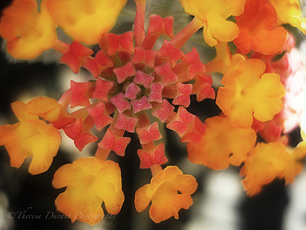 Photograph Simply Sunshine by Theresa Durant on 500px