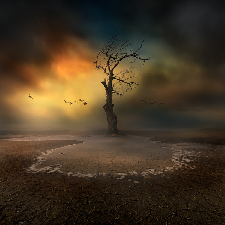 Photograph Lonely by Piotr Krol on 500px