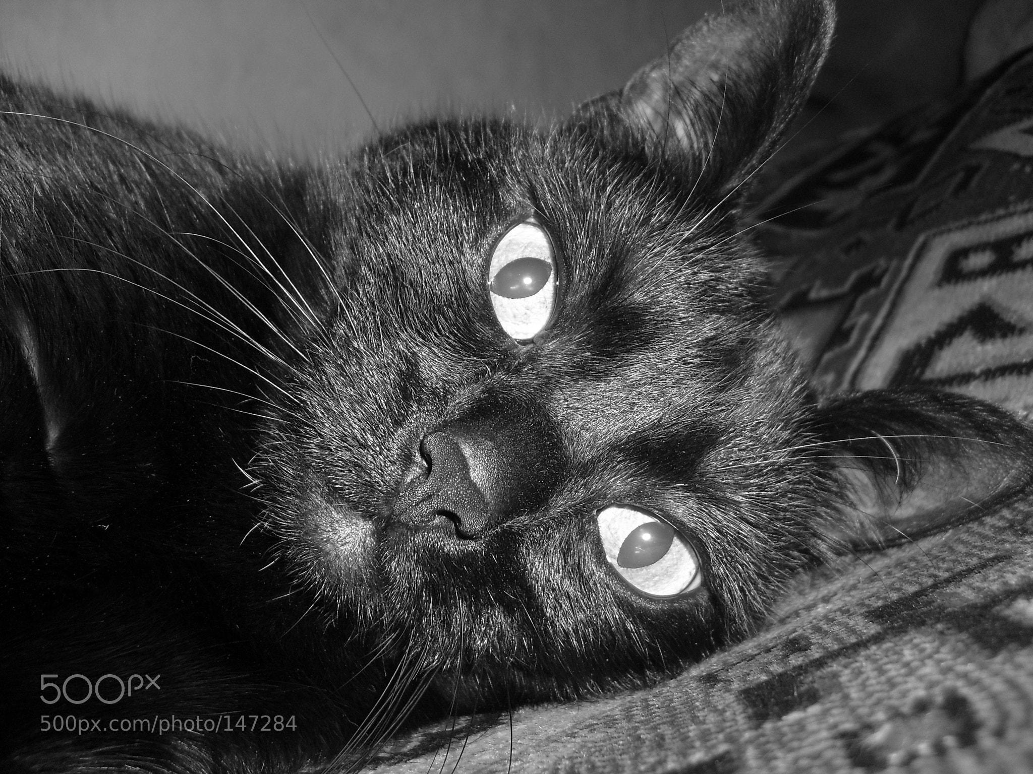 Photograph Cat by Lusia Kruzenshtern on 500px