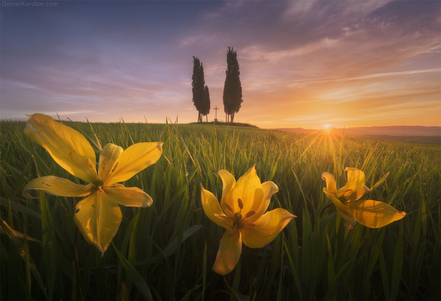 Blooming Tuscany by Daniel Kordan on 500px.com
