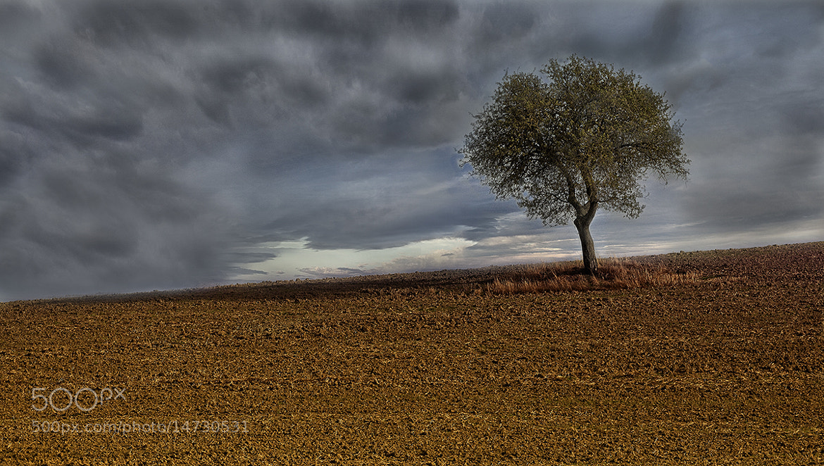 Photograph lonely tree by Riccardo  Lubrano on 500px