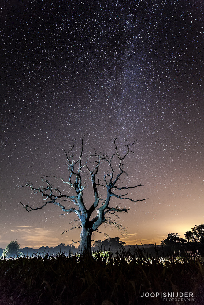 Photograph Tree at Night by Joop Snijder on 500px