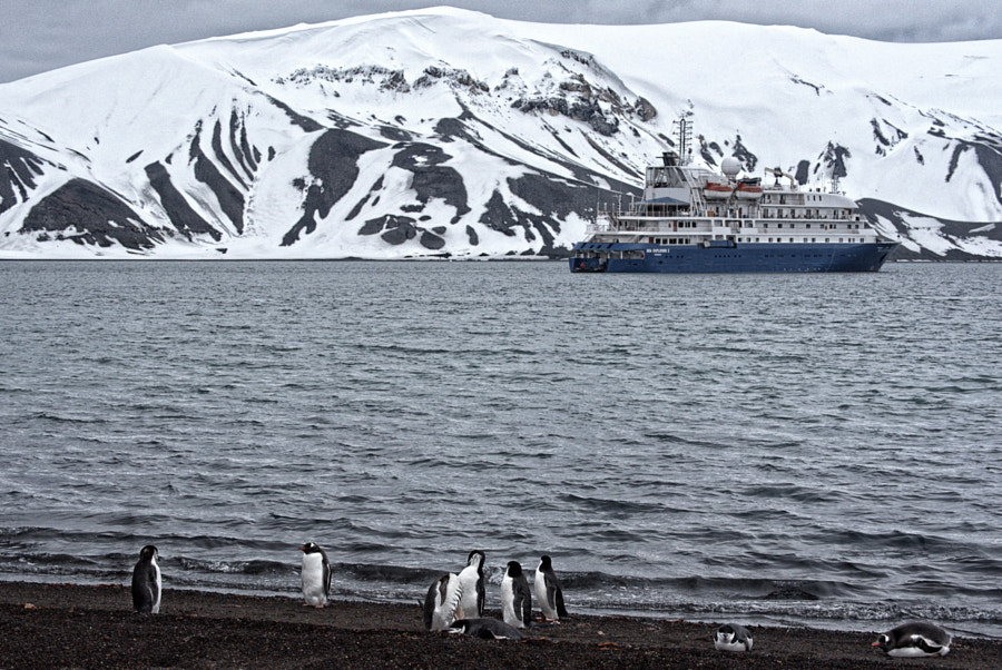 Penguins at Deception Island, Antarctica by Angik Sarkar on 500px.com