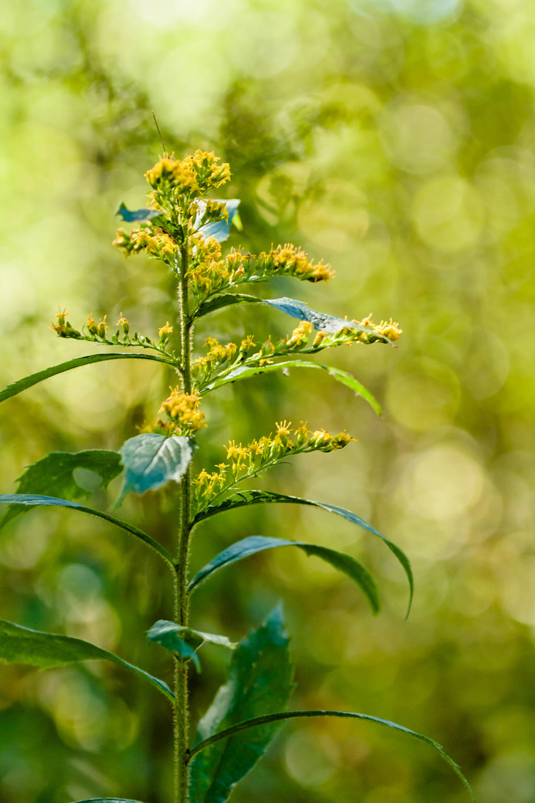 Photograph Yellow Plant by Carrie Gregory on 500px