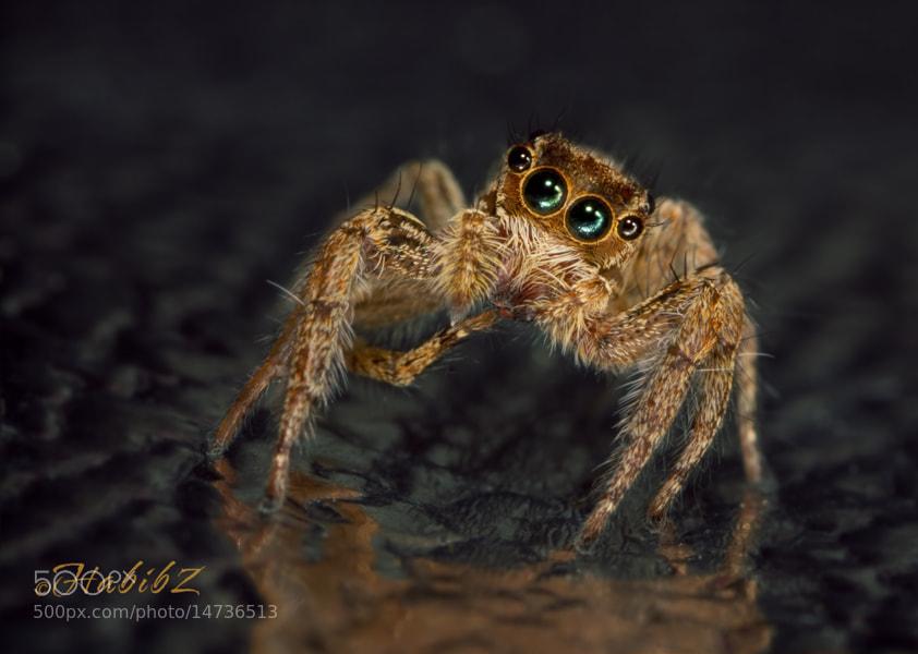 Photograph Spider '7 by Habib Zadjali on 500px