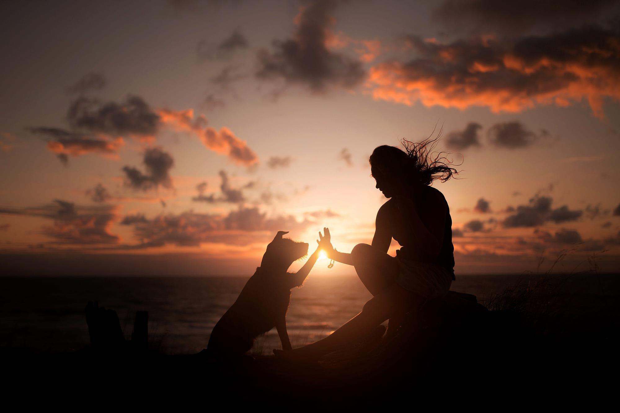 Doggy Dog World  cover image
