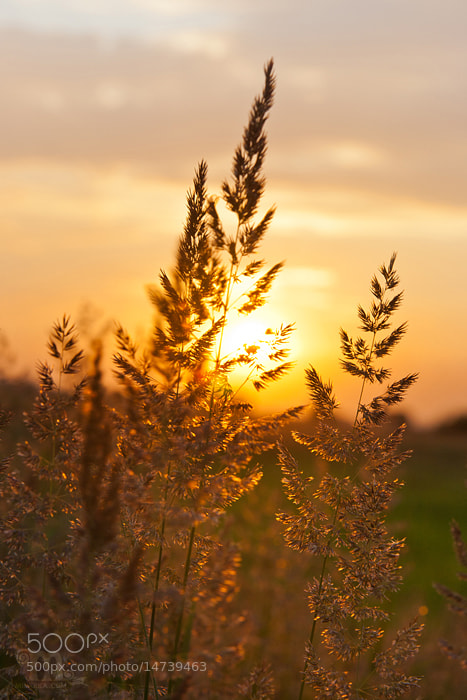 Photograph Sunset by Lidia Ryzhenko on 500px