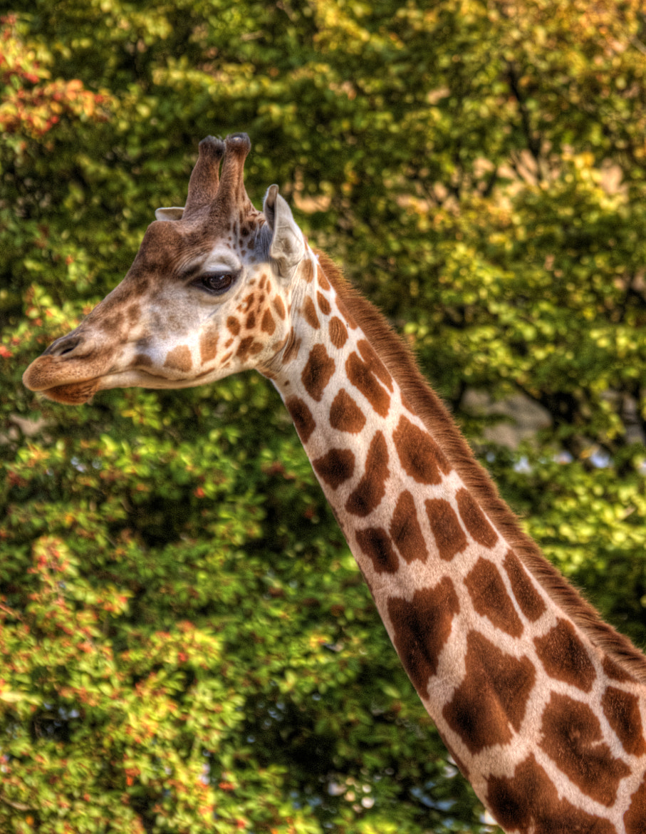 Photograph London Zoo by Robert Fretwell on 500px