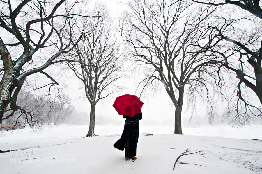Photograph Prospect Park Blizzard by Navid Baraty on 500px