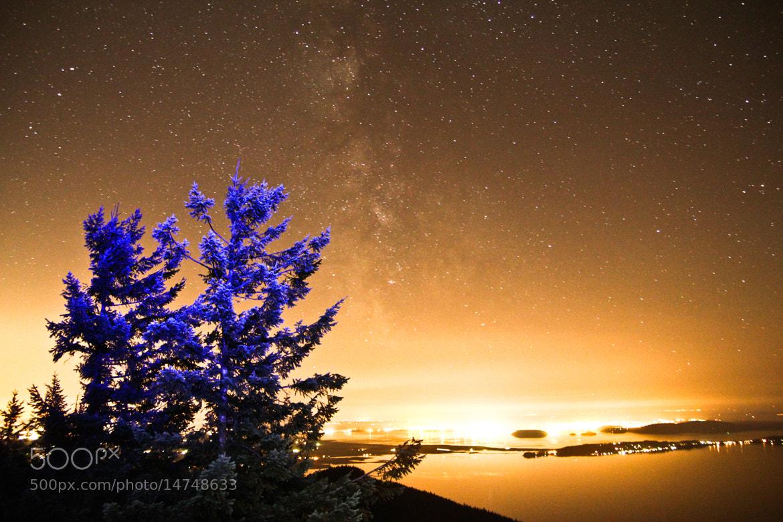 Photograph Blue Pine by Zach Becker on 500px