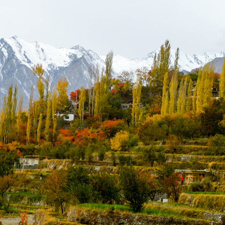 hunza in gold, Nikon COOLPIX P60
