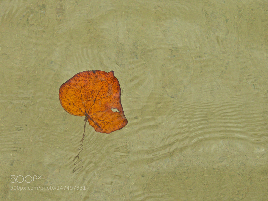 The Leaf by thisismarysharp1