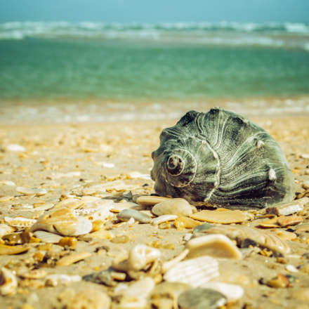 Daydreams on the Shore Nature Photograph