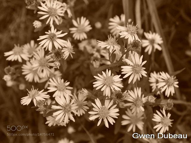 Photograph Tiny Petals by Gwen  Dubeau on 500px