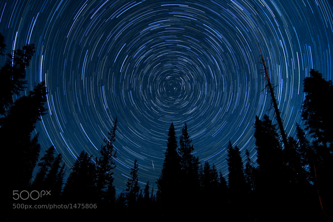 Photograph Star Trail through the Pine Trees by Dan Barr on 500px