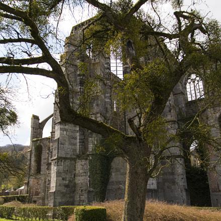 Abbaye d'Aulne panorama arbre