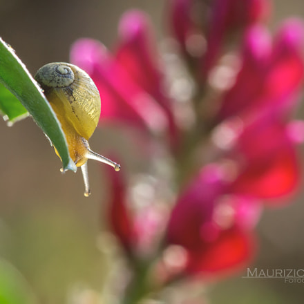 The Little Snail...