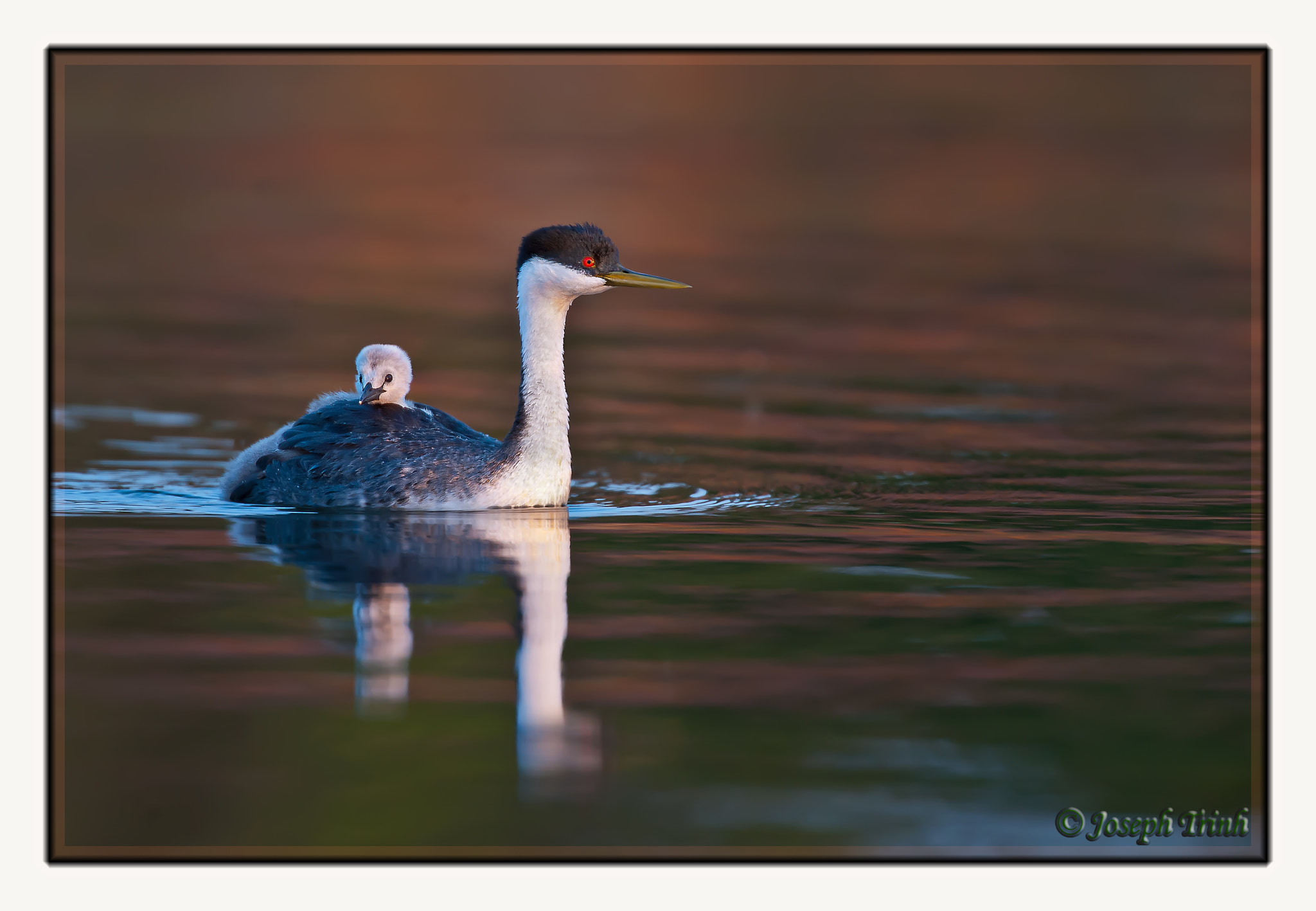 Photograph Riding On Mama's Back by Joseph Trinh on 500px