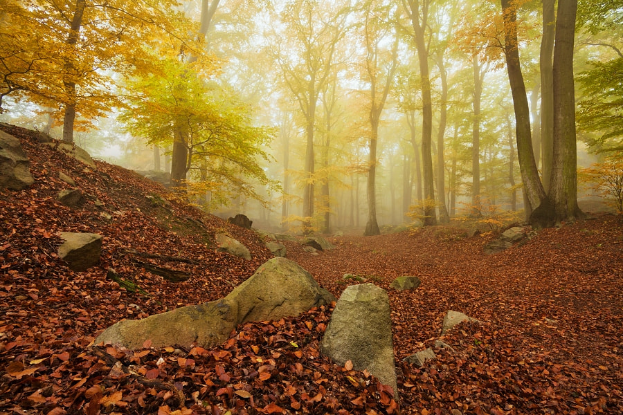 Photograph Mysterious forest  by Daniel Řeřicha on 500px