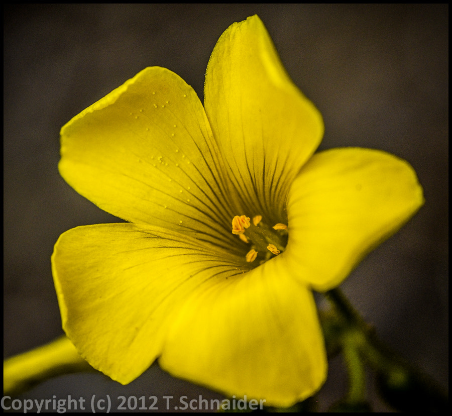 Photograph Very ... Yellow by tschnaider on 500px