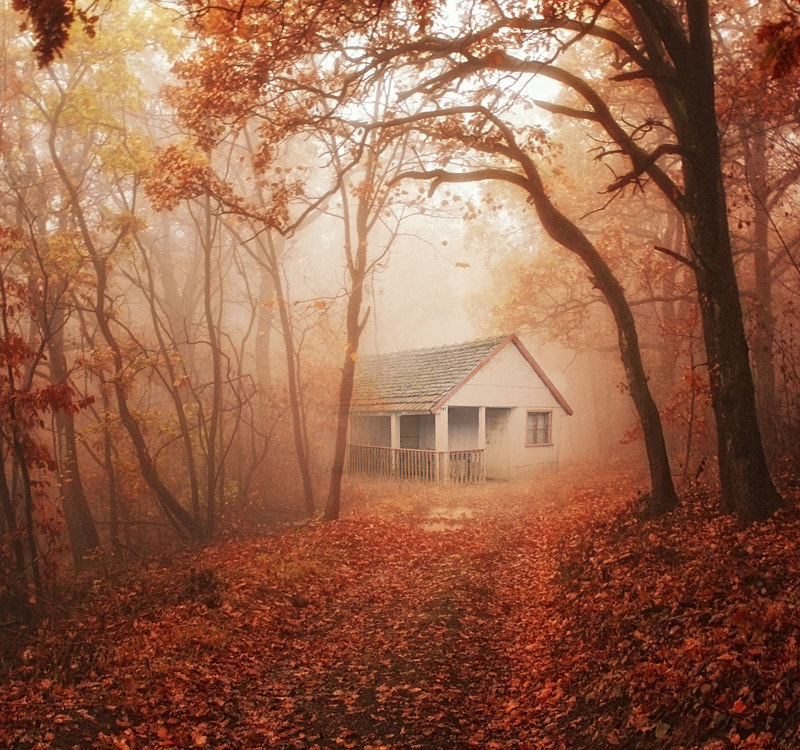 Photograph Old house in the forest... by Heaven Man on 500px