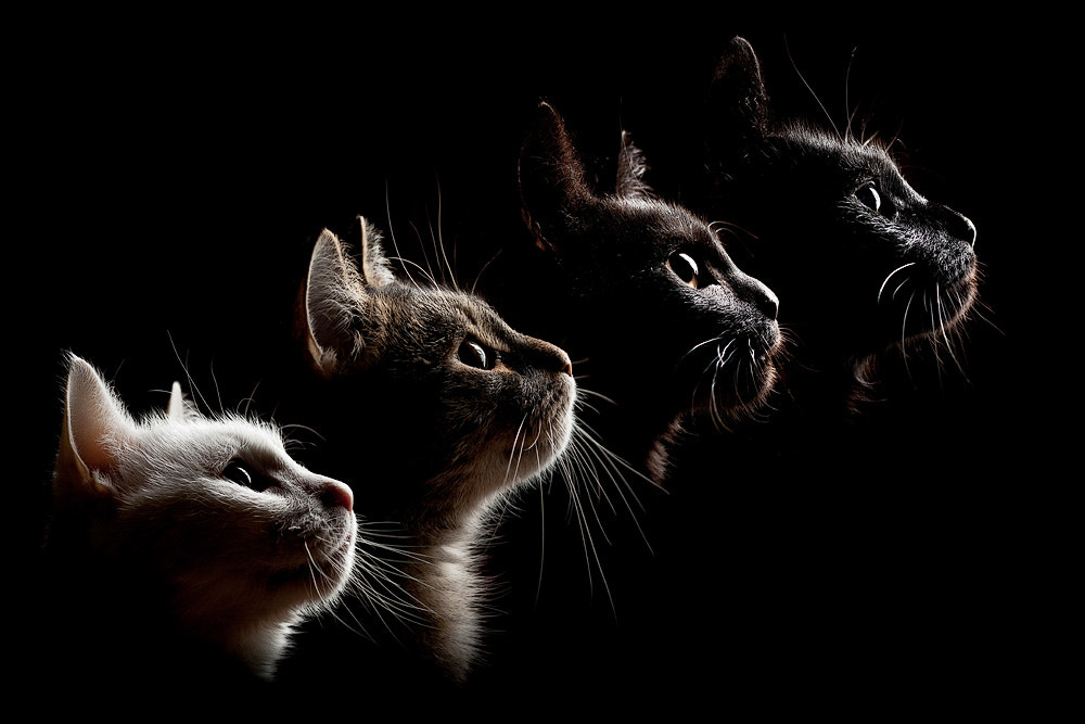 Photograph 4 cats by Oszkár Dániel Gáti on 500px