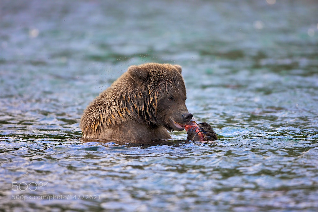 Photograph Never Eating Alone by Buck Shreck on 500px