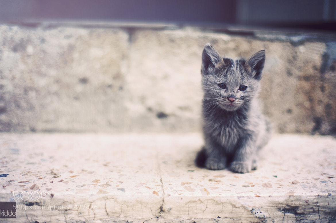 Photograph Melts your heart by happykiddo on 500px