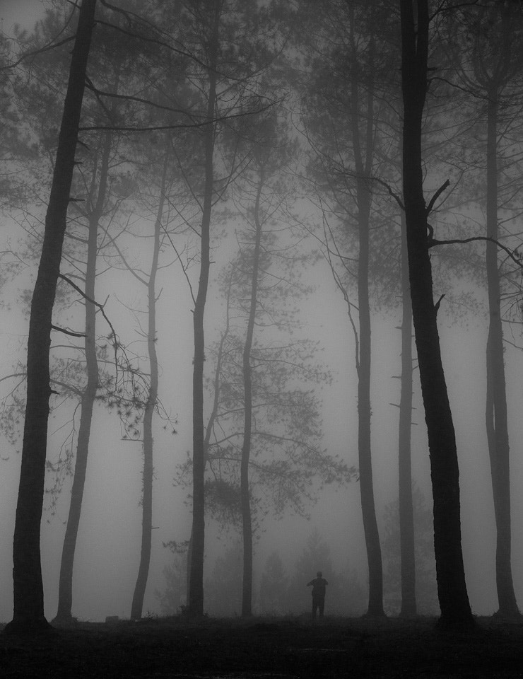 Photograph Stranger in Misty Forest by Fang Keong Lim on 500px
