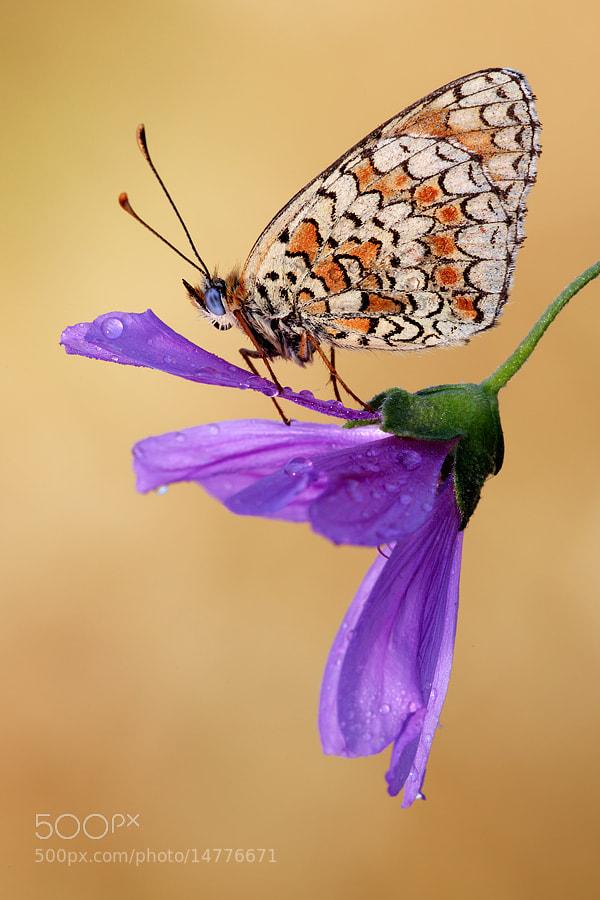 Photograph my preferred flower by Alberto Di Donato on 500px