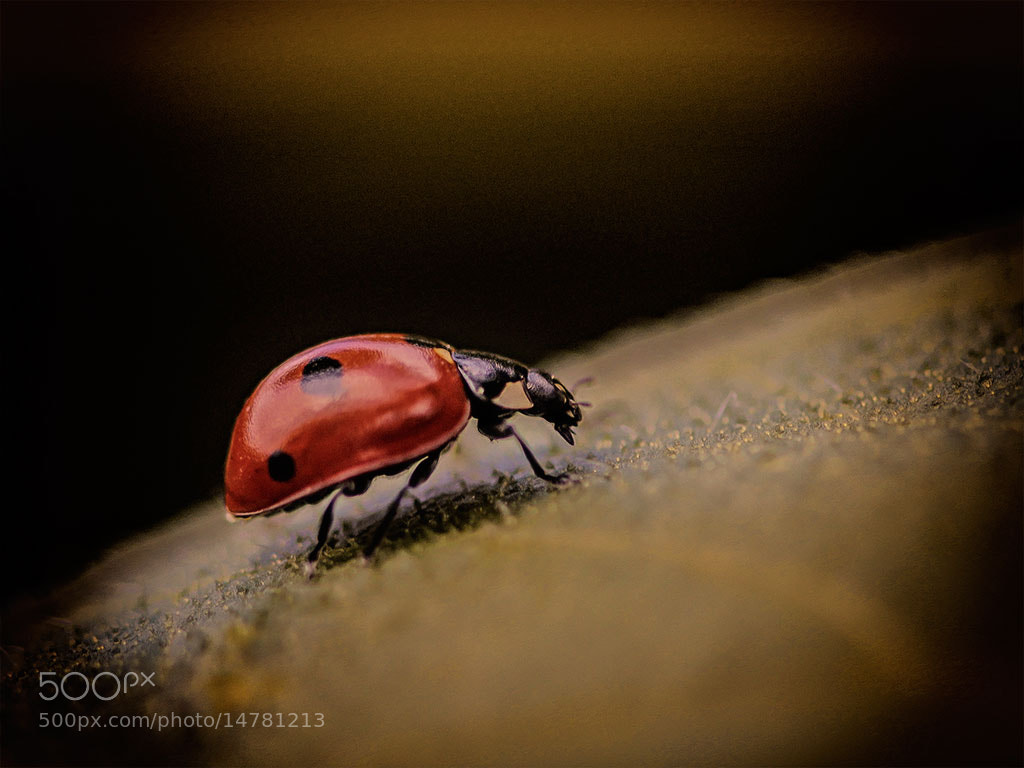 Photograph LadyBug by Nathalie  on 500px