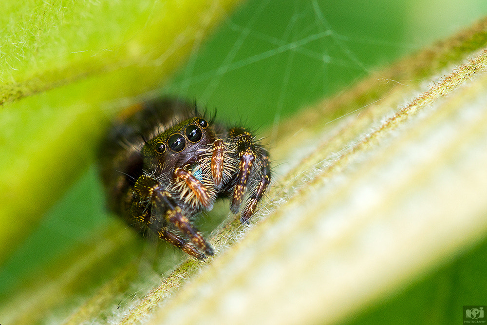 Photograph Cute Spider! by Nhut Pham on 500px