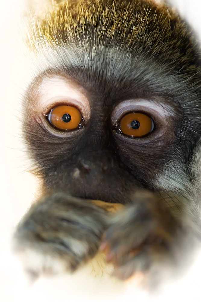 Photograph Those Eyes by Mario Moreno on 500px