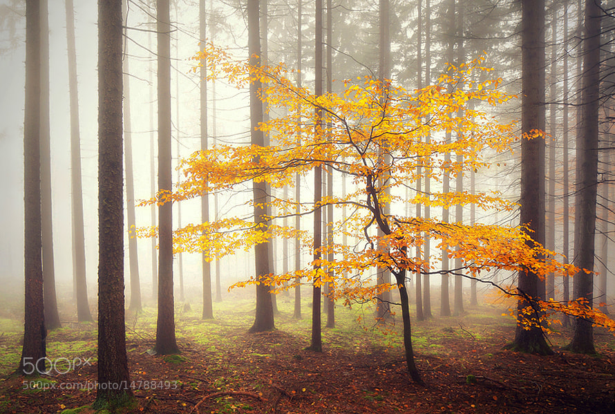 Photograph The Burning Tree by Kilian Schönberger on 500px