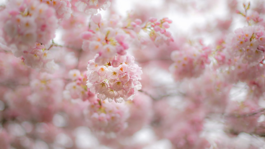 Blossom Happiness by Kimber Leigh on 500px.com