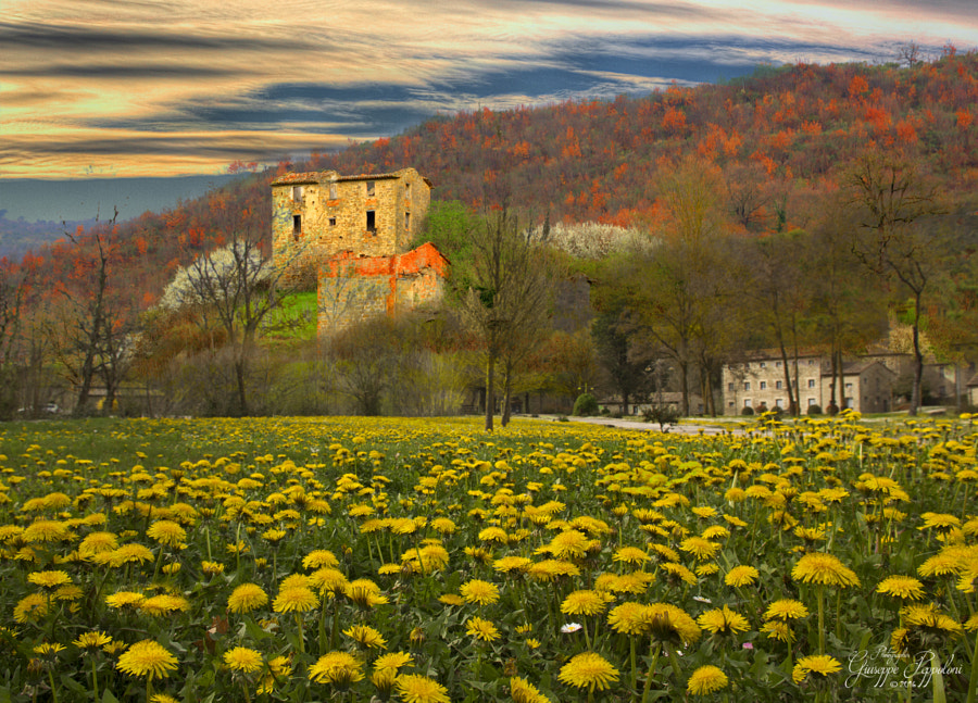 Springtime by Giuseppe  Peppoloni on 500px.com