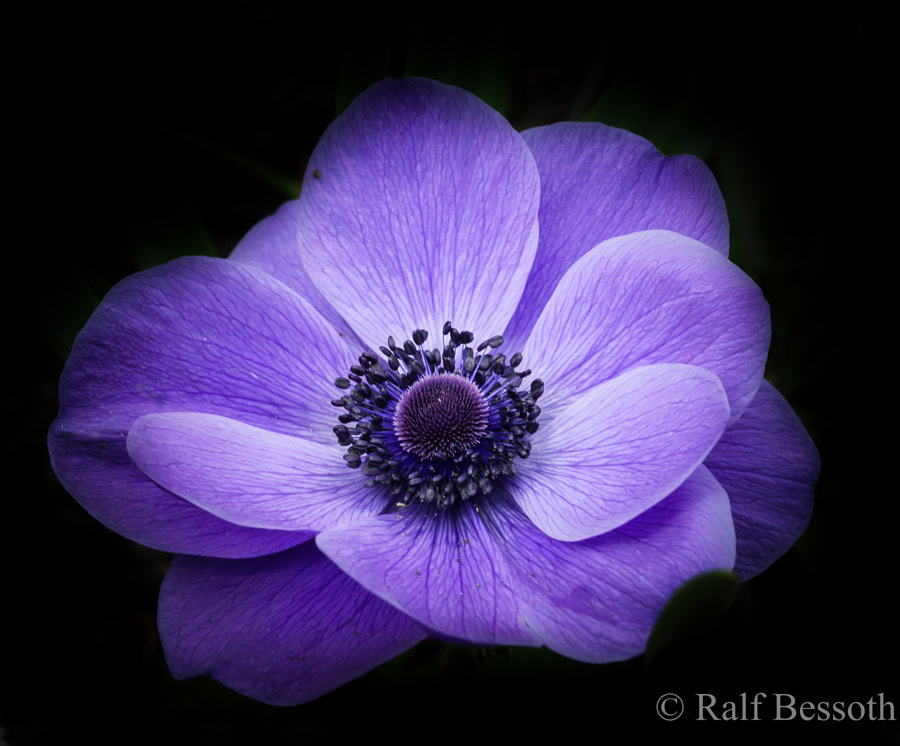 Flower by Ralf Bessoth on 500px.com