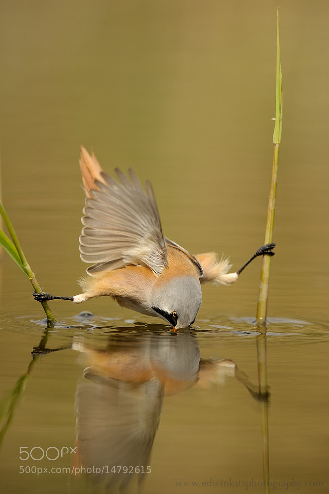 Photograph Bird In Trouble by Edwin Kats on 500px