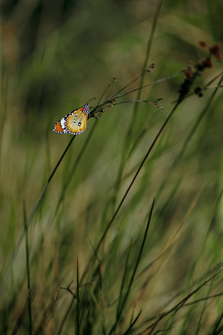 Photograph Lost in vegetation by Giorgos Maravelakis on 500px