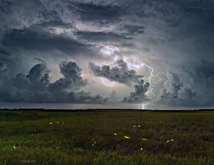 Lightning and Lightning Bugs by Frank Delargy on 500px.com