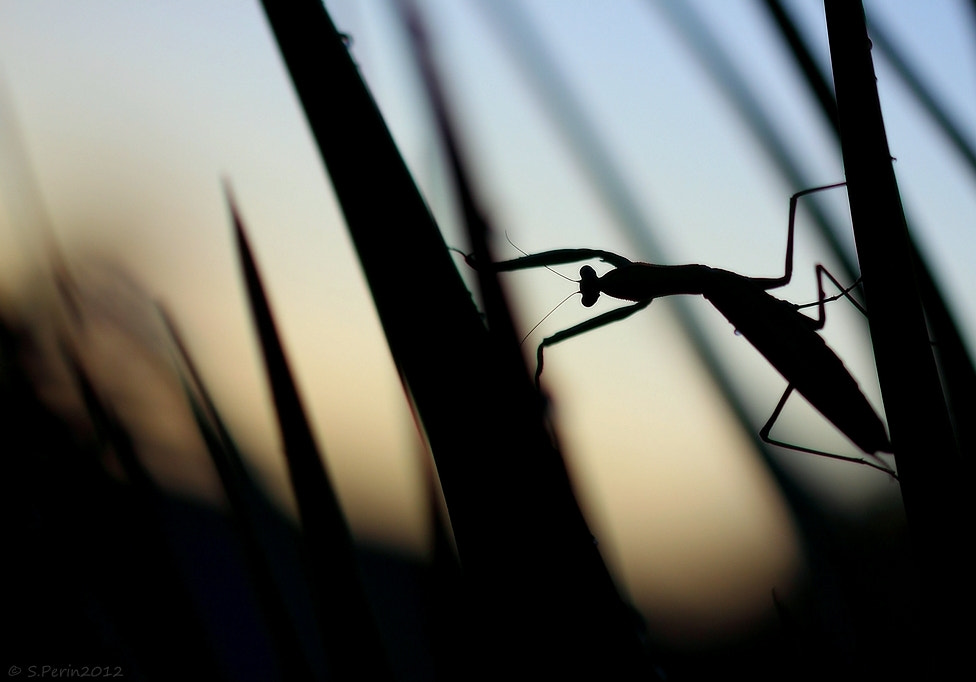 Photograph Sporting Mantis  by Stephane PERIN on 500px