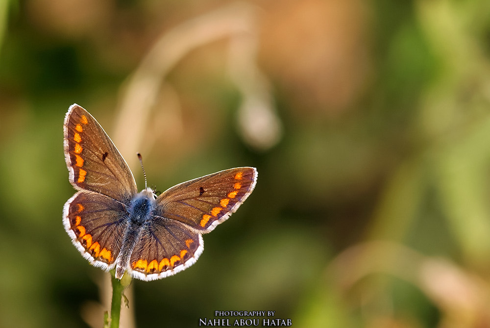 Photograph BUTTERFLY  by nahel abou hatab on 500px