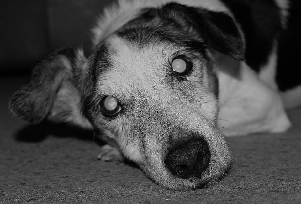 Photograph My Old Dog by Garry Atkinson on 500px