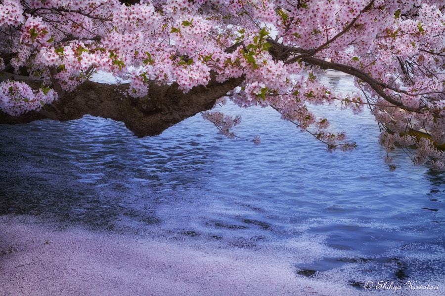 Listening to the spring songs by Shihya Kowatari on 500px.com