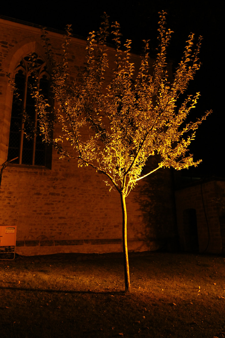 Photograph Golden Tree by Manuel Stolle on 500px