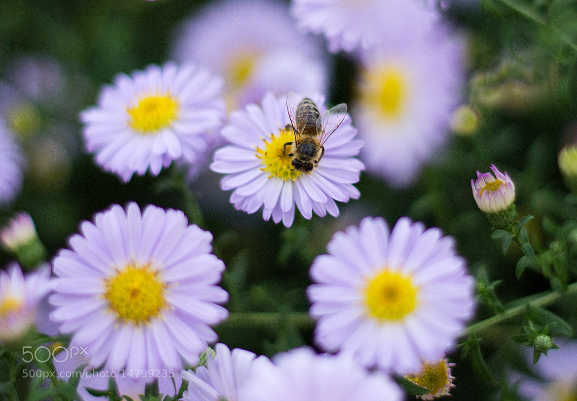 Photograph Working Bee by Szabó István on 500px