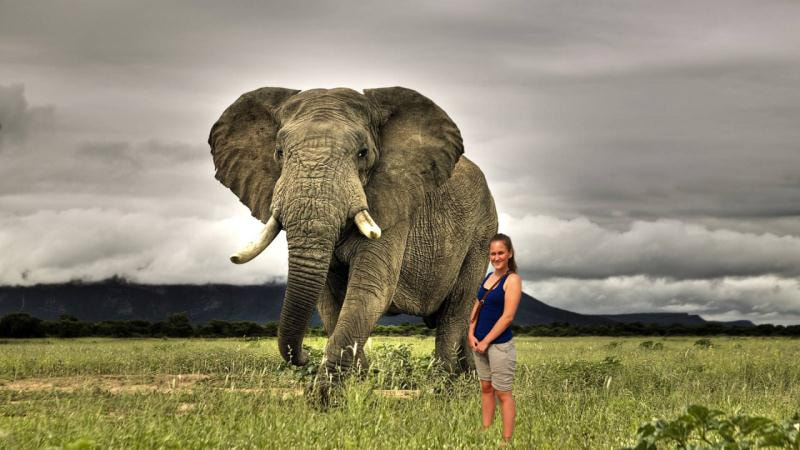Photograph Elephant with Melinda by Andrews Design on 500px