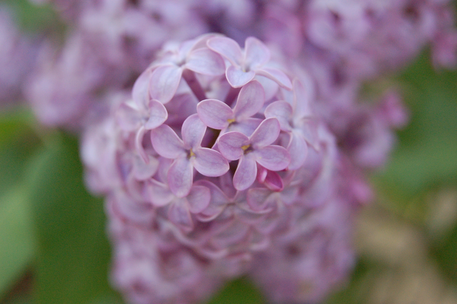 Photograph Lilac by Bethany Clara on 500px