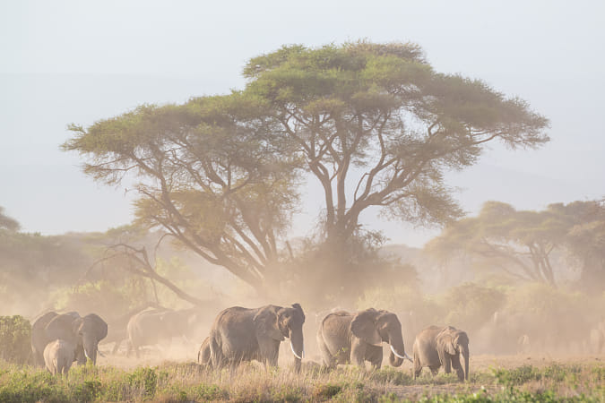 Elephants in front of Kilimanjaro, Amboseli, Kenya by Heather Balmain on 500px
